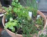 Save Money by Growing herbs